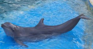 wolphin