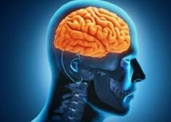 Bagian Bagian Otak Manusia dan Hewan Serta Perbedaannya