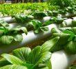 6 Cara Membuat Nutrisi Hidroponik