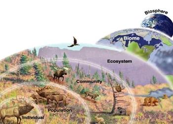 Ekologi Komunitas: Pengertian dan Ruang Lingkup Pelajarannya