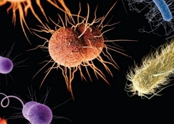 Reproduksi Bakteri: Jenis dan Tahapannya