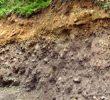 Tanah Aluvial: Sifat, Pembentukan dan Ciri-Cirinya