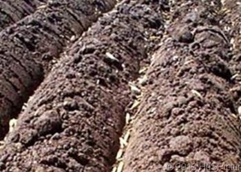 Tanah Regosol: Ciri, Jenis dan Penyebarannya