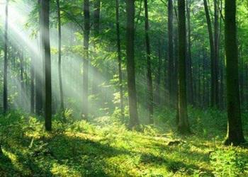Hutan Lindung: Pengertian – Fungsi – Ciri dan Contohnya