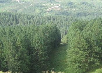 Hutan Musim: Pengertian – Ciri – Jenis dan Persebarannya
