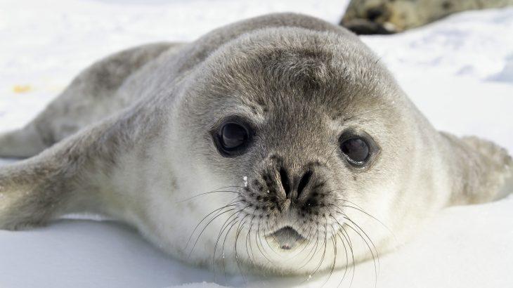 8 Hewan Yang Hidup Di Antartika